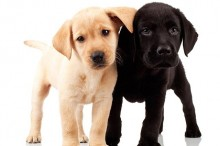 estudiantes perro