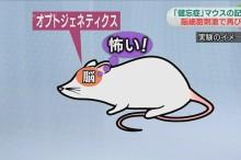 ratones amnesicos