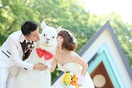 Alpacas son la nueva sensacion en las bodas japonesas