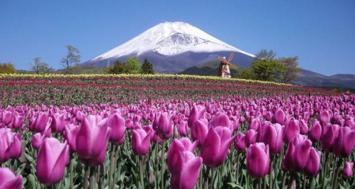 &nbspFestival de las Tulipas en el Parque Grinpa en Shizuoka