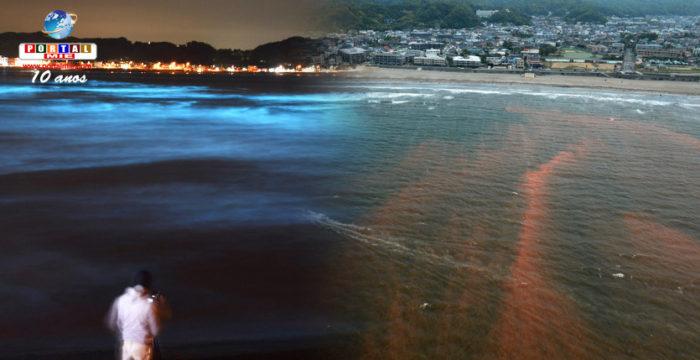 Marea roja de día y brillante de noche: extraño fenómeno asusta moradores de Kanagawa
