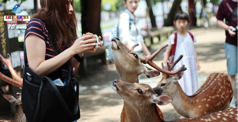 &nbspNúmero de personas que son heridas al alimentar venados en Nara es cada vez mayor