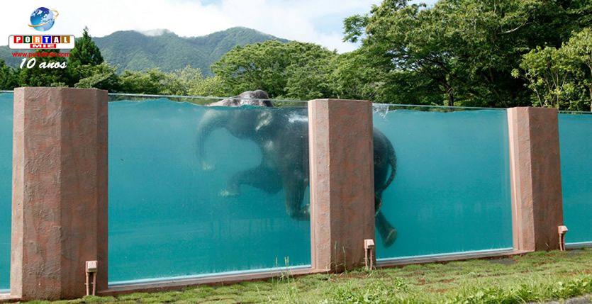 &nbspExhibición de elefantes nadando en piscina de parque en Shizuoka ya  comenzó