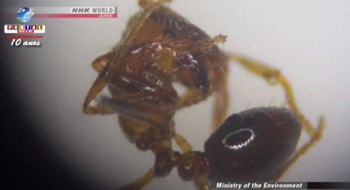 &nbspJapón inicia medidas de grande escala para el control de hormigas venenosas