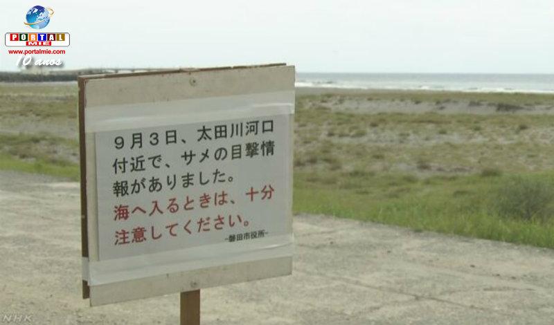 Surfista de Shizuoka puede haber sido mordido por tiburón