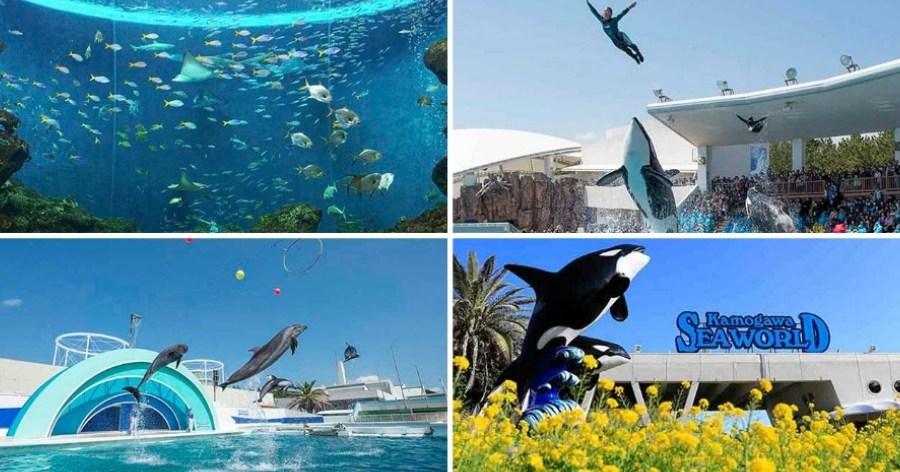 &nbspDescuento de 50% en el precio de entrada del acuario para los extranjeros