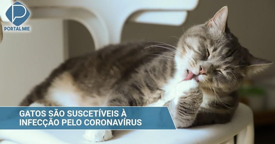 """&nbspInvestigadores japoneses alertan """"gatos son susceptibles a la infección por el nuevo coronavirus"""""""