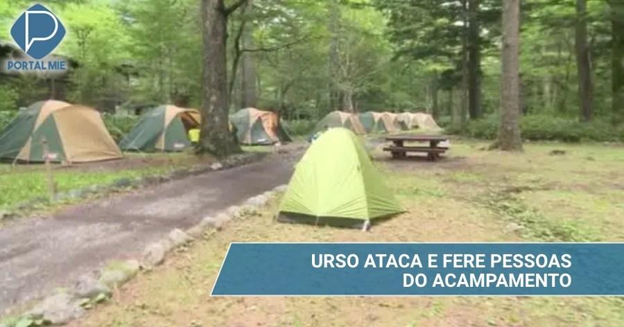 &nbspOso ataca y hiere a personas en el camping