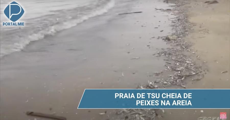 &nbspMillares de peces en la arena de la playa en Tsu